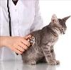 Ветеринарные клиники в Кильмези